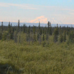 Very lucky to see Mount McKinley/Denali. Usually obscured by weather from here. Never visible from the park headquarters because it is behind so many other mountains. Denali is in the middle of a long range of mountains and the visitor center is at one end.