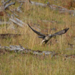 Yellowstone (3 of 5) – The Birds
