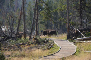 YellowstoneTour_013