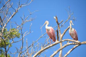 Everglades_041