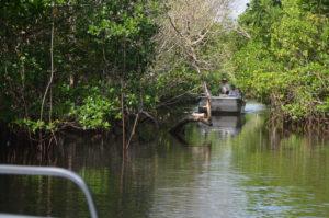 Everglades_053
