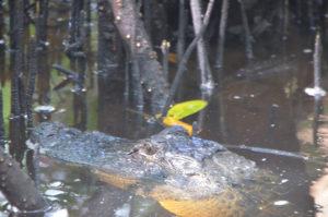 Everglades_060
