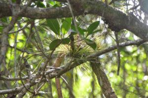 Everglades_061