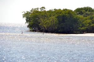 Everglades_083
