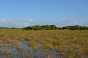 Everglades_087