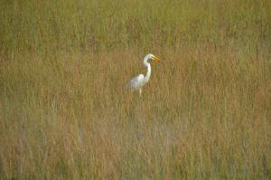 Everglades_091