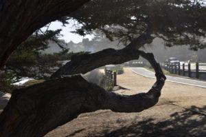 Monterey_001